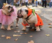 Halloween-Party-Bring-Your-Dog
