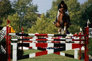 Showpark-Horse-Show